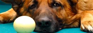 Sport-dog-perro